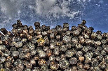 Dřevo je nejlevnějším palivem, díky kůrovci poráží i uhlí